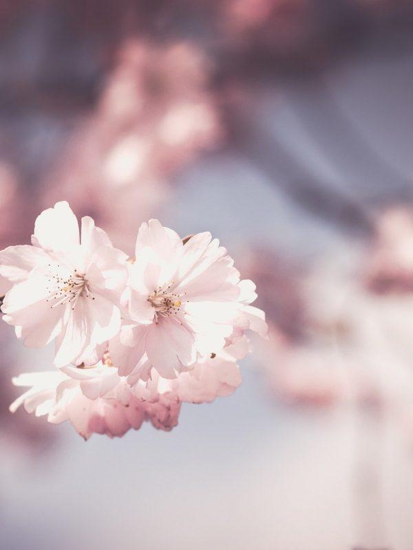 pink-1326168_1920